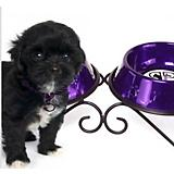 Scroll Double Diner Dog Feeder