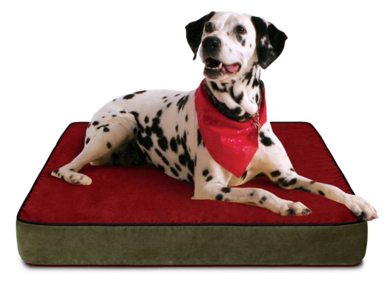 Buddy Beds Colorado Mt Orthopedic Dog Bed Large