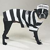 Casual Canine Prison Pooch Dog Costume
