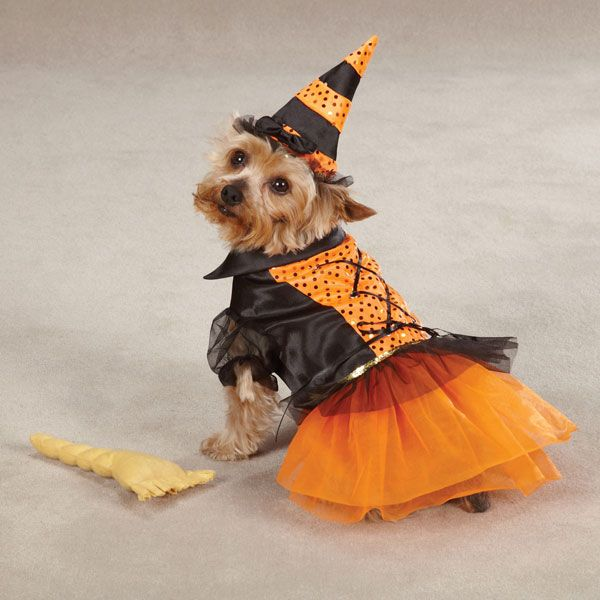 CC Spellhound Witch Dog Costume MD