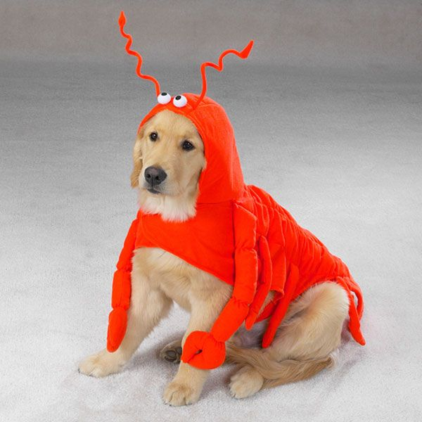 CC Lobster Paws Dog Costume XS