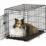 Midwest ACE Single Door Dog Crate