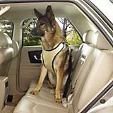 GG Ride Right Comfort Dog Car Harness