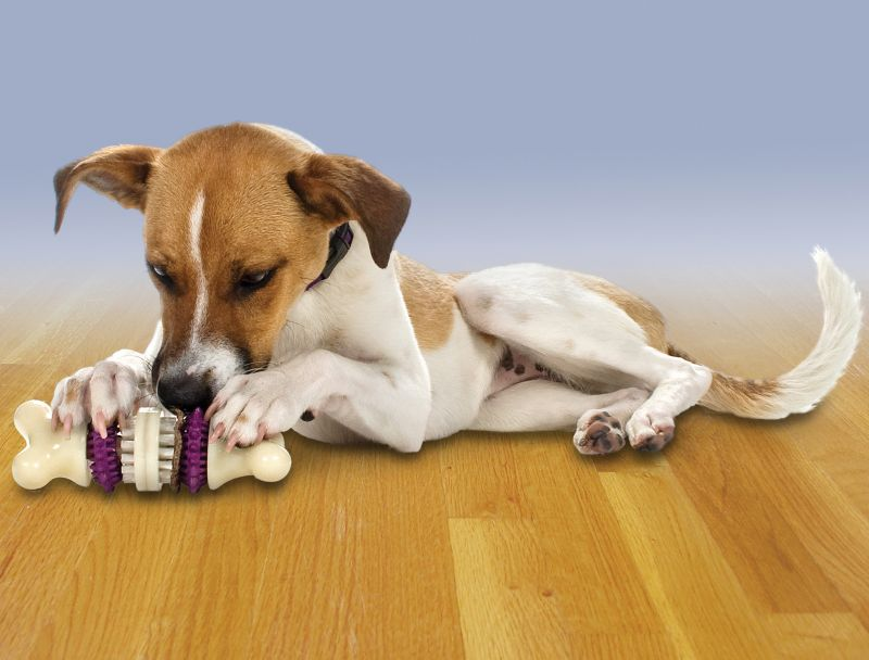Busy Buddy Bristle Bone Dog Toy Small