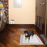 PetSafe Train N Praise Dog Potty Training System