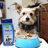 PetSafe Indigo Fresh Dog Dental Sauce