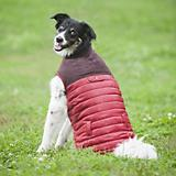 Fashion Pet Red Cord Puffy Dog Vest