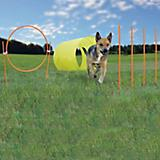 Dog Games Dog Agility Starter Kit