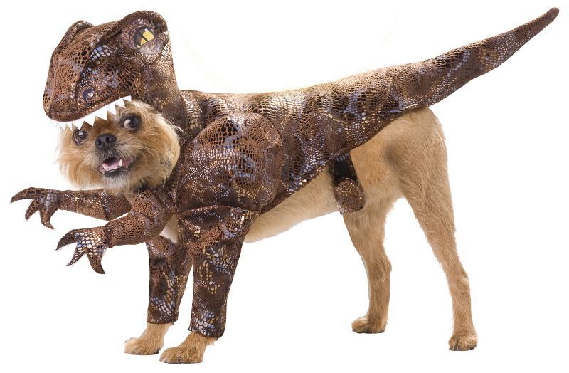 Animal Planet Raptor Halloween Dog Costume Small