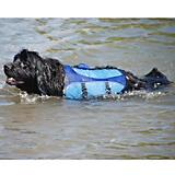 Henry and Clemmies Blue Dog Lifejacket