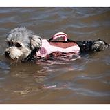 Henry and Clemmies Pink Dog Lifejacket