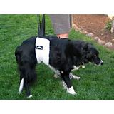 Hoistabout Dog Lift Harness