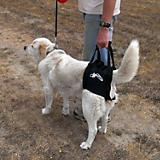 Walkabout Airlift One Pet Harness