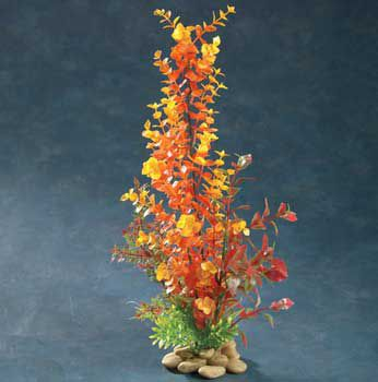 Aquatic Creations Orange Bacopa Plant 15 in