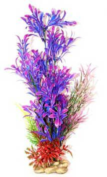 Aquatic Creations Blue/Purple Hygrophilia Plant