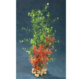 Aquatic Creations Green Bacopa Plant