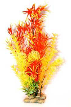 Aquatic Creations Orange/Red Hornwort Plant