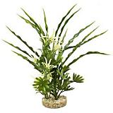Blue Ribbon Fiesta Aqua Bush Aquatic Plant