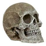 Blue Ribbon Mini Human Skull Aquatic Decoration