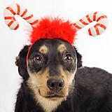 Kyjen LED Candy Cane Headband for Dogs