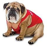 Zelda Wisdom Lifeguard Dog Costume