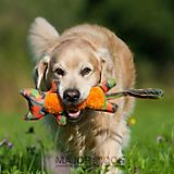 MajorDog Tiger Fetch Dog Toy