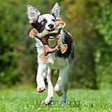 MajorDog Frog Fetch Dog Toy