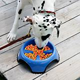 JW Pet Skidstop Slow Feed Pet Bowl