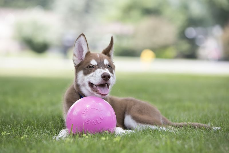 Bounce and Play Ball Dog Toy Medium Pink