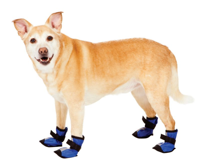 Fashion Pet Essential Dog Boots Large Blue