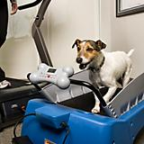 PetZen Small DogTread Dog Treadmill Fitness Kit