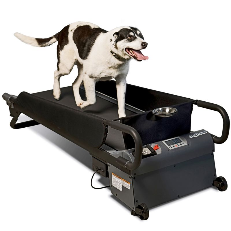 PetZen Medium DogTread Dog Treadmill Fitness Kit