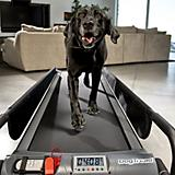 PetZen Large DogTread Dog Treadmill Fitness Kit