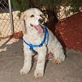 Kwik Step Dog Harness
