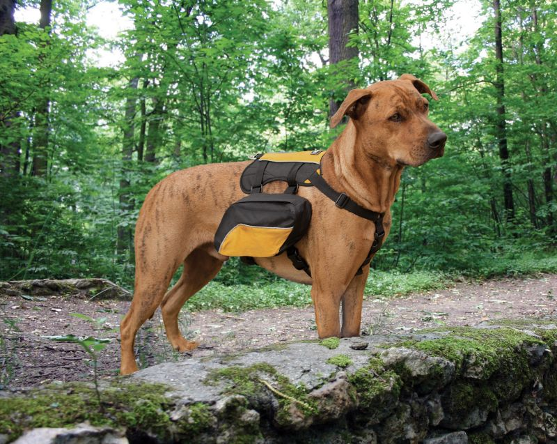 kurgo wander pack dog backpack on lovemypets.com