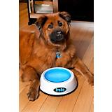 FroBo Freezable Dog Water Bowl