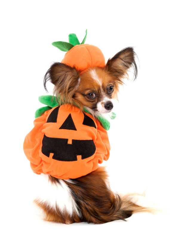 Pumpkin Halloween Dog Costume X-Small
