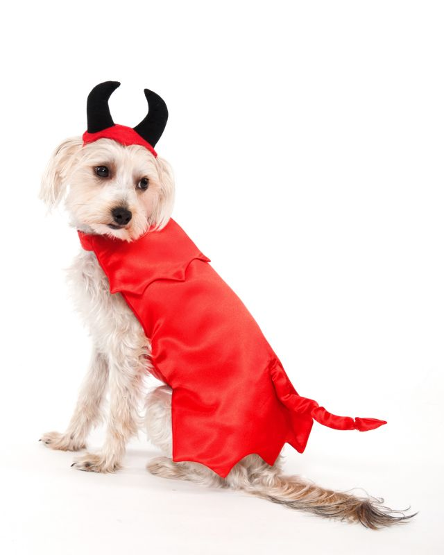 Devil Halloween Dog Costume Small