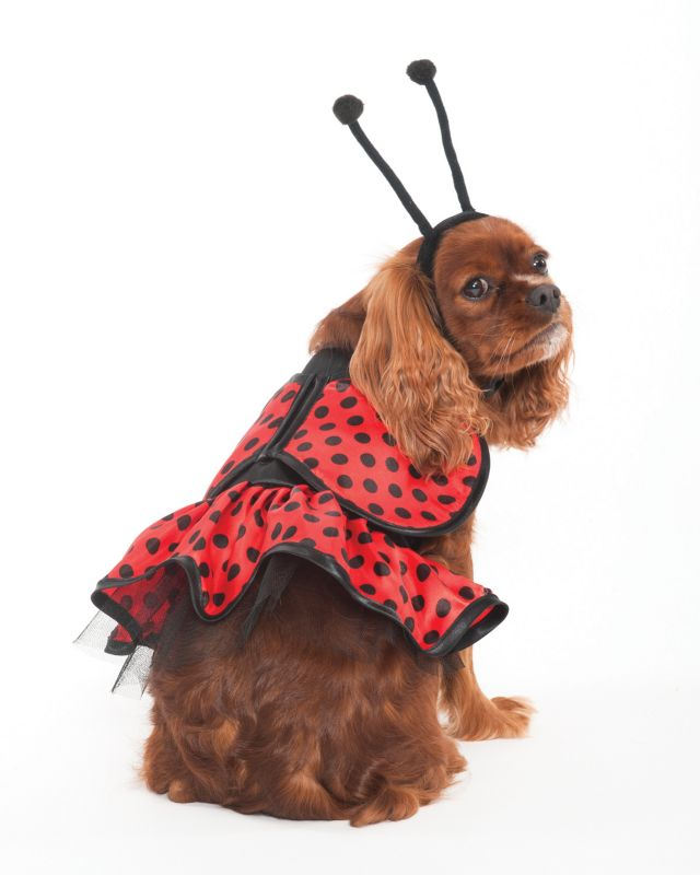 Ladybug Halloween Dog Costume Medium