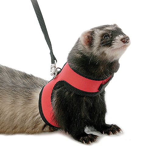Marshall Neoprene Ferret Harness Best Price