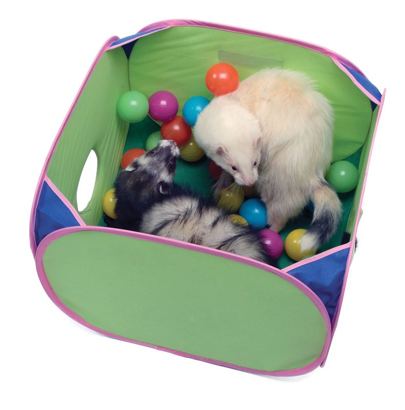 Marshall Ferret Pop-N-Play