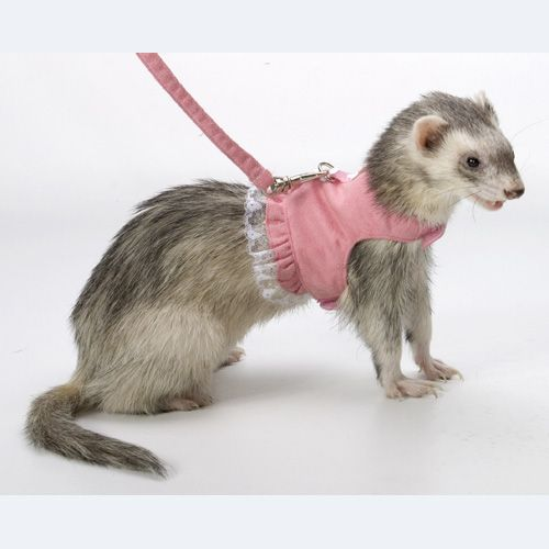 Marshall Ferret Fashion Dress Lead Best Price