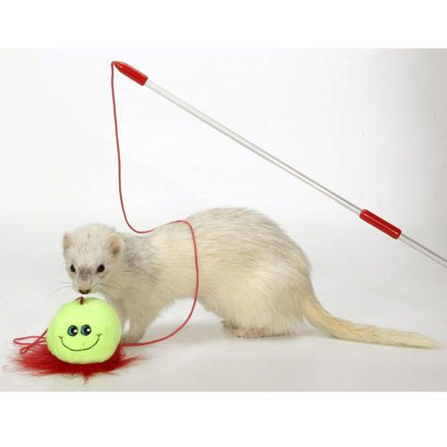 Marshall Ferret Interactive Teaser Toy