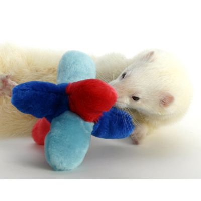 Marshall Ferret Tumble Toy