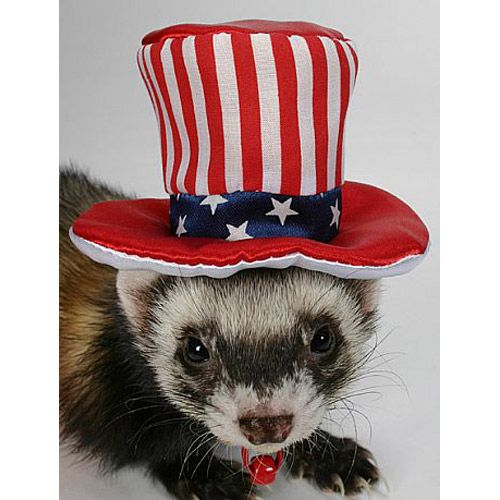 Marshall Ferret Uncle Sam Hat
