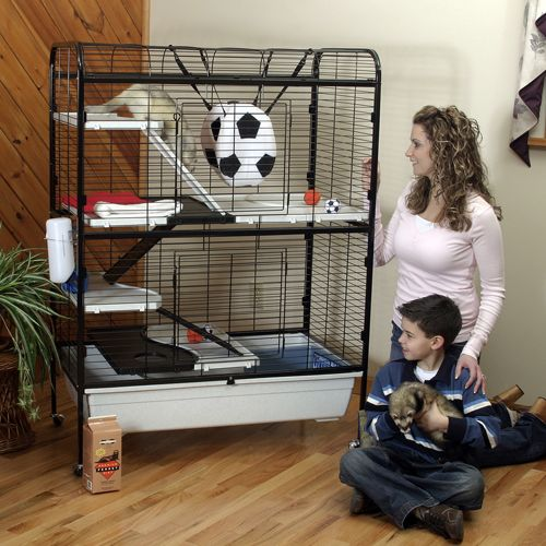 Marshall Ferret Penthouse Best Price