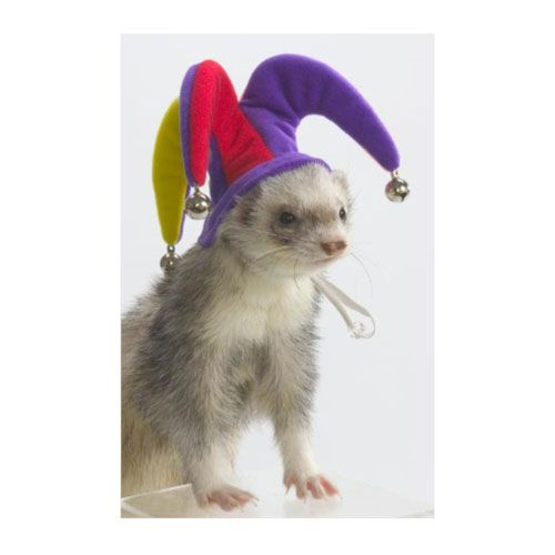 Marshall Ferret Jester Hat