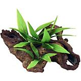 Blue Ribbon Mopani Wood with Silk Plants