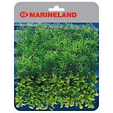 Marineland Springiri and Boxwood Plant Mat