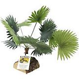 Flukers Fern Plant w/Wooden Base Reptile Decoratio